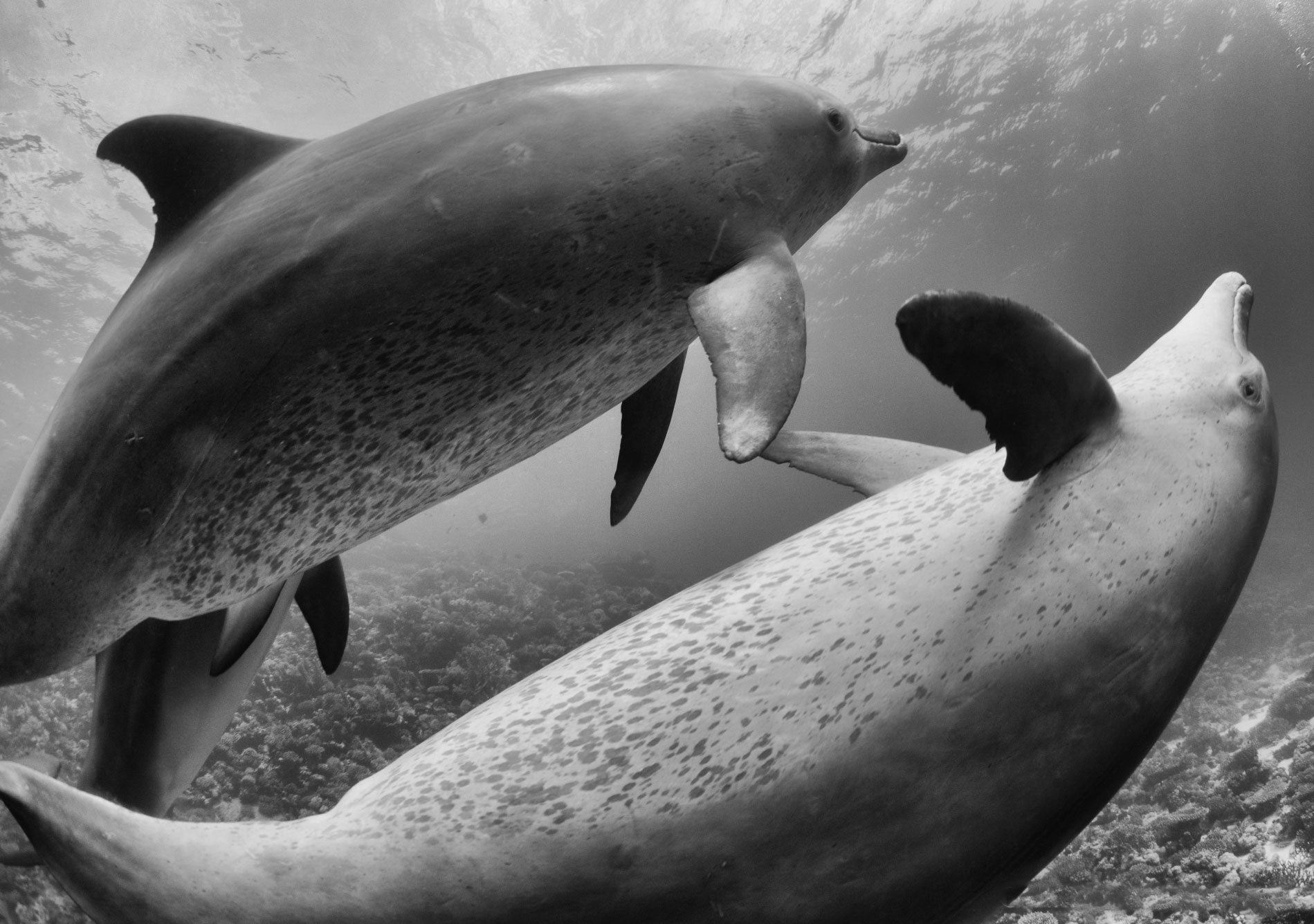Dolphins-in-mono