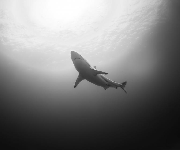 Shark-yep!
